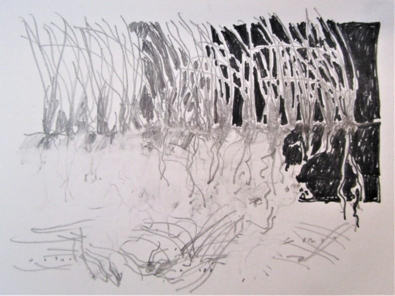 beach grasses sketch
