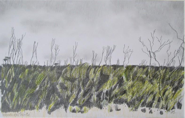 regrowth after bushfire