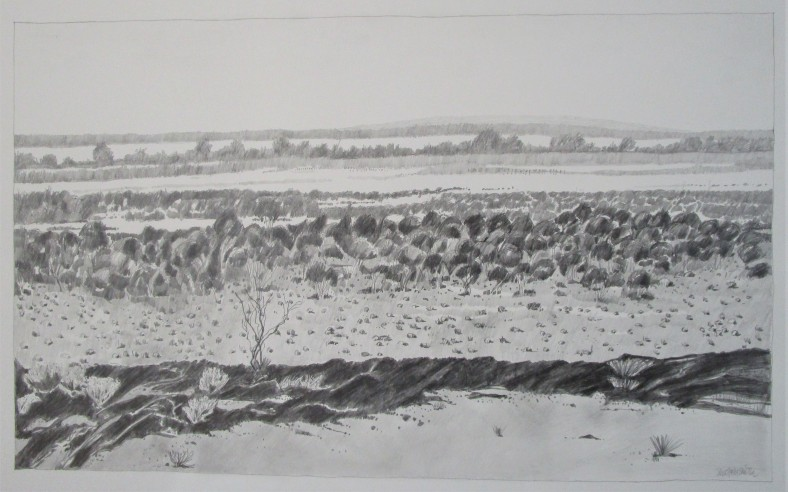 Looking Towards Mongers Lake 75x45cm pencil