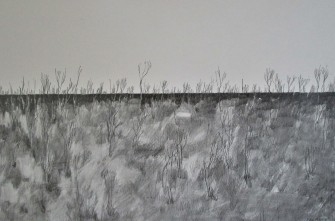 burnt bush recovering 2 35x55cms pencil