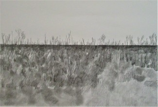 burnt bush recovering1 35x55cms pencil
