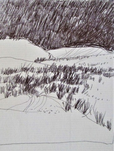sand and grasses
